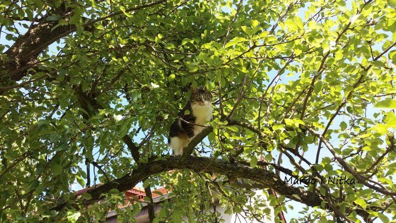 Kot nadrzewny